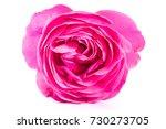 close up of pink orange roses... | Shutterstock . vector #730273705