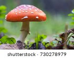 Red Fly Agaric Mushroom Or...