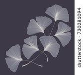 ginkgo biloba leaves   Shutterstock .eps vector #730281094