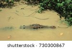 Small photo of Close up of a salt water crocodile in the wild swimming in murky muddy brown river waters hunting for prey in Adelaide River, Northern Territory, Australia near Darwin