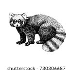 Red Panda Hand Drawn Image....
