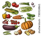 set vegetables. cucumbers  napa ... | Shutterstock .eps vector #730318861