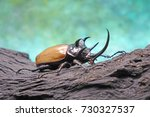 Beetles Insects Bugs   The Fiv...