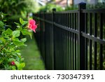 aluminum fence and  hibiscus... | Shutterstock . vector #730347391