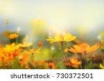 close up beautiful yellow... | Shutterstock . vector #730372501