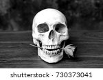 Human Skull Holds A Rose In The ...