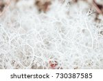 nature backgrounds. natural... | Shutterstock . vector #730387585