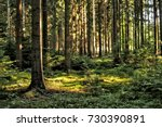 forest trees with sunlight... | Shutterstock . vector #730390891