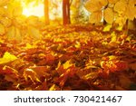 autumn leaves on the sun and... | Shutterstock . vector #730421467