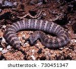 acanthophis antarcticus  common ... | Shutterstock . vector #730451347