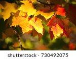 fall foliage | Shutterstock . vector #730492075