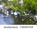 raindrop on grass | Shutterstock . vector #730494769