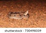 a juvenile venomous malayan pit ... | Shutterstock . vector #730498339