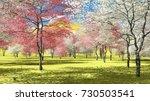 Flowering Dogwood Trees In...