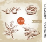 hand drawn sketch spices set....   Shutterstock .eps vector #730509124