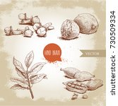 hand drawn sketch spices set....   Shutterstock .eps vector #730509334