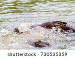 the iridescent shark feeding in ... | Shutterstock . vector #730535359