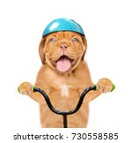 Stock photo funny puppy in protective helmet on bike isolated on white background 730558585