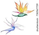 tropical hawaii plants in a... | Shutterstock . vector #730567759