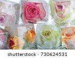 frozen roses in ice cubes | Shutterstock . vector #730624531