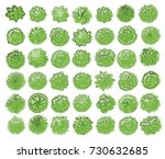 various green trees  bushes and ... | Shutterstock . vector #730632685