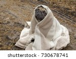Stock photo cute dog breed pug wrapped in blanket in autumn forest 730678741