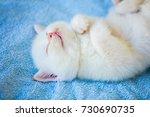 happy sleeping cute little... | Shutterstock . vector #730690735
