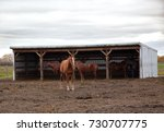 a brown horse stands in front... | Shutterstock . vector #730707775