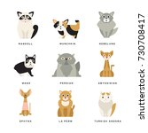 flat domestic breeds of cats | Shutterstock .eps vector #730708417