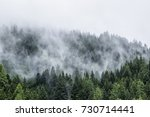 forest in mist  low clouds in... | Shutterstock . vector #730714441