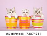 Stock photo cute kittens sitting inside colorful pots containers 73074154