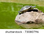 Turtle sitting on a stone taking a sunbath - stock photo