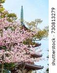beautiful sakura cherry blossom ... | Shutterstock . vector #730813279