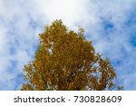 tree with autumn leaves toned... | Shutterstock . vector #730828609