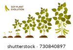 soy plant evolution with leaves ... | Shutterstock .eps vector #730840897