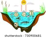 freshwater lake ecosystem | Shutterstock .eps vector #730900681