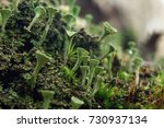 Close Up Of Cyan Lichen And...