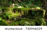 Moss On Stump In The Forest....