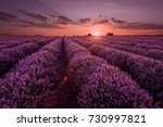 lavender fields. beautiful... | Shutterstock . vector #730997821