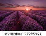 lavender fields. beautiful... | Shutterstock . vector #730997821