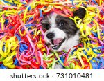 poodle dog having fun and  a... | Shutterstock . vector #731010481