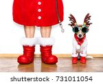 Stock photo christmas santa claus jack russell dog isolated on white background with reindeer hat and red 731011054