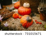 decorative pumpkins on straw.... | Shutterstock . vector #731015671