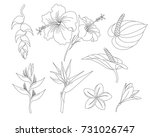 Tropical Flowers In A Set Of...