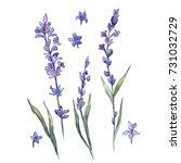 wildflower lavander flower in a ... | Shutterstock . vector #731032729
