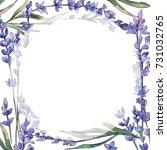 wildflower lavander flower... | Shutterstock . vector #731032765