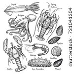 sea animals big set. ink sketch ... | Shutterstock .eps vector #731041204