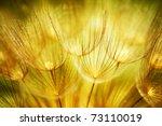 soft dandelions flower  extreme ... | Shutterstock . vector #73110019
