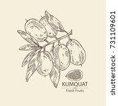 background with kumquat  ... | Shutterstock .eps vector #731109601