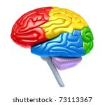 Brain lobes in different colors isolated on white - stock photo
